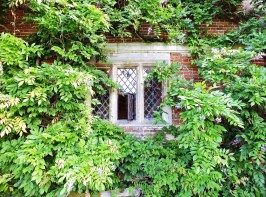 Window in Wisteria